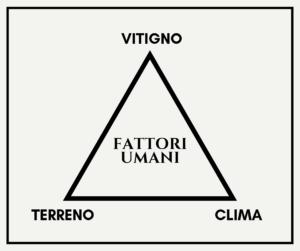 Schema ecosistema viticolo