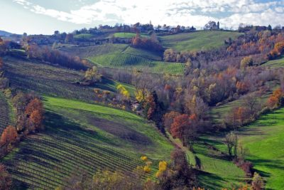 Vino in Emilia Romagna - Botrytis Enoteca Ferrara