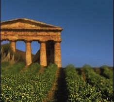Il vino in Sicilia